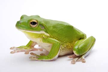 蛙脚简笔画