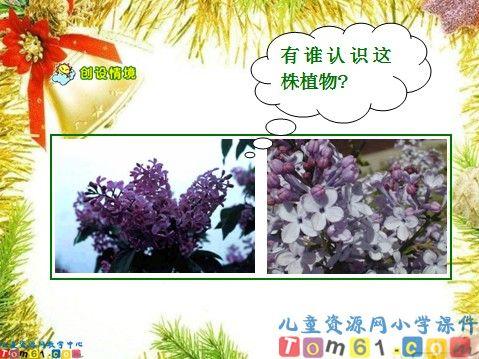 一株紫丁香课件8