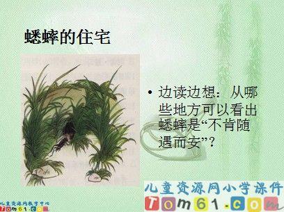 蟋蟀的住宅课件6_人教版小学语文四年级上册课件_小学