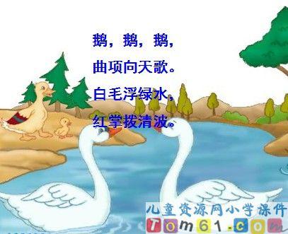 白鹅课件8