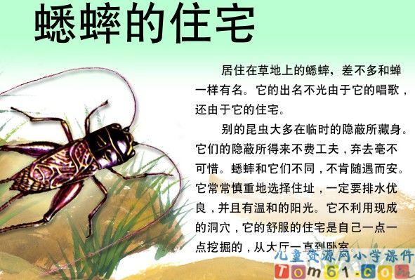 蟋蟀的住宅课件15
