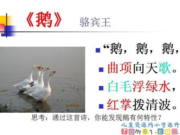 白鹅课件20_人教版小学语文四年级上册课件