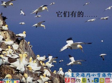 苏教版二年级下语文鸟岛中第三段表现鸟多,鸟窝多,鸟蛋多的4个词语