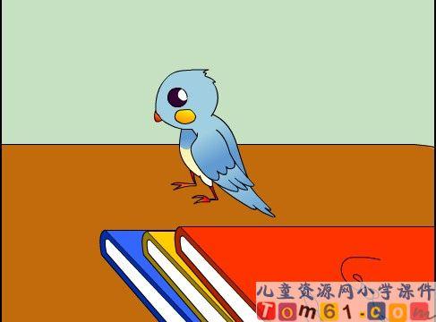 珍珠鸟课件5