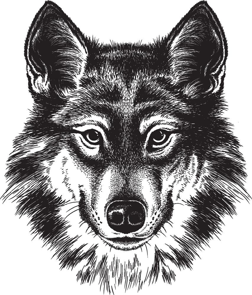 动物-素描图集