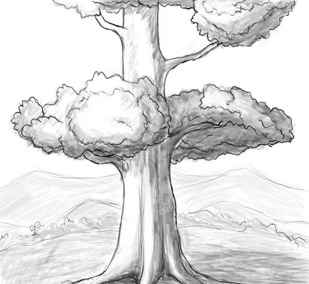 参天大树-素描图集