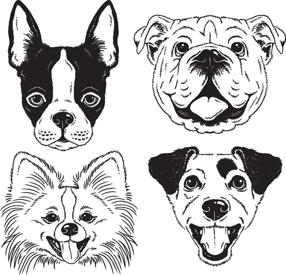 小狗-素描图集图片_儿童素描_少儿图库_中国儿童资源网