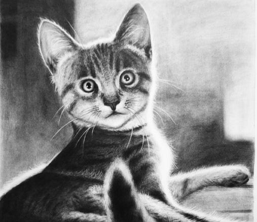 高清超写实素描动物