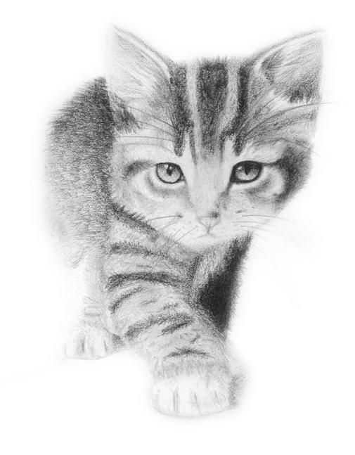 壁纸 动物 猫 猫咪 素描 小猫 桌面 505_647 竖版 竖屏 手机
