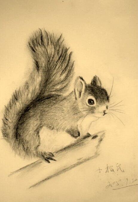 松鼠-素描图集图片_儿童素描_少儿图库_中国儿童资源网