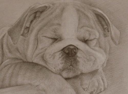 手绘动漫人物铅笔画狗