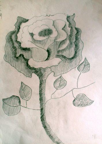 玫瑰花-素描图集图片_儿童素描_少儿图库_中国儿童