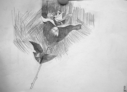 玫瑰花-素描图集
