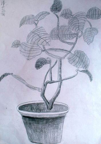 铅笔素描欧式花