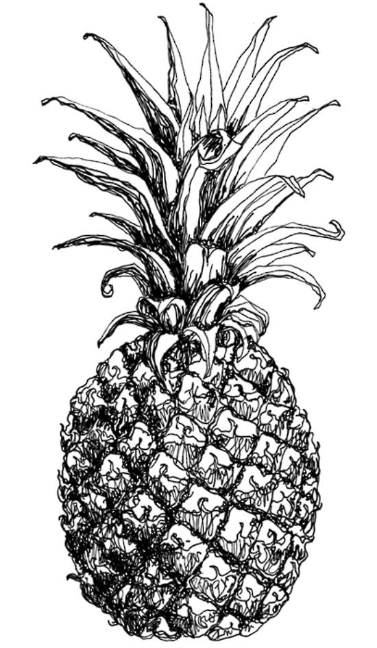 菠萝-素描图集图片_儿童素描_少儿图库_中国儿童资源网