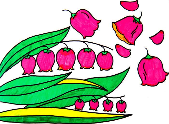 铃兰花-水彩画图集